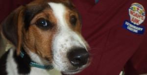 Noah's Ark Veterinary Centre pet service