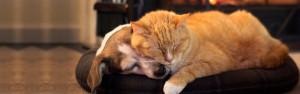 Pet dog sleeping