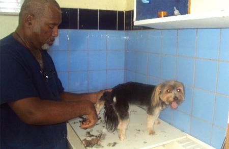 Pet care service